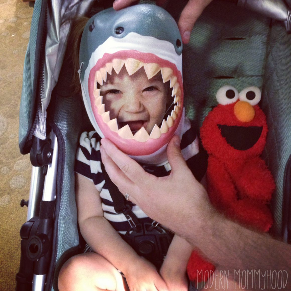 Adventure Aquarium Mabel the shark