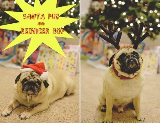 Santa Pug and Reindeer Boy
