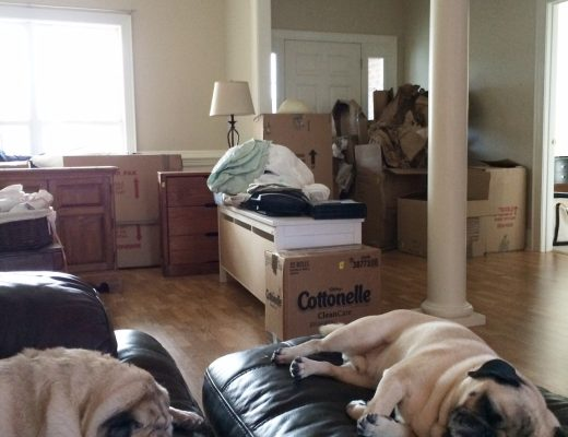 Boxes everywhere...and pugs too!